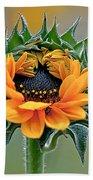 Sunflower Opens Bath Towel