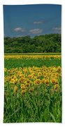 Sunflowers Weldon Spring Mo_dsc9830_16 Bath Towel