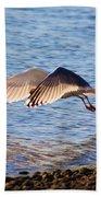 Sunlit Gull Wings Bath Towel