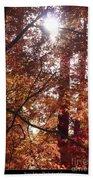 Sunny Autumn Day Poster Bath Towel