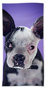 Super Pets Series 1 - Bugsy Close Up Bath Towel