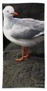 Suprised Australian Seagull Bath Towel
