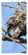 Swainson Hawk Bath Towel