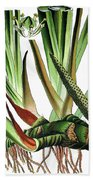 Sweet Flag Or Calamus, Acorus Calamus Bath Towel