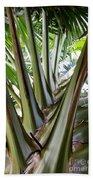 Talipot Palm Bath Towel