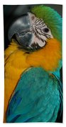 Tango, The Blue And Gold Macaw Bath Towel
