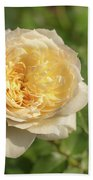 Tchaikovski Hybrid Tea Rose, White Rose Originally Produced By  Bath Towel