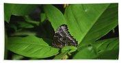 Terrific Eyespots On A Owl Butterfly On Leaves Bath Towel