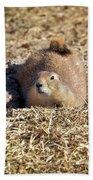 The Amazing Black-tailed Prairie Dog Bath Towel
