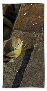 The Bath - American Goldfinch - Spinus Tristis Bath Towel