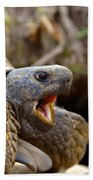 The Great Gopher Tortoise Bath Towel