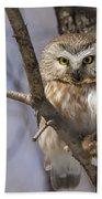 Northern Saw-whet Owl Bath Towel