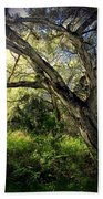 The Mighty Oaks Of Garland Ranch Park 1 Bath Towel