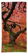 The Old Japanese Maple Tree In Autumn Bath Towel