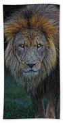 The Old Lion Bath Towel