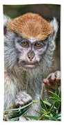 The Stare A Baby Patas Monkey  Bath Towel