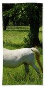 Three White Lipizzan Horses Grazing In A Field At The Lipica Stu Bath Towel