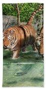 Tiger's Water Park Bath Towel
