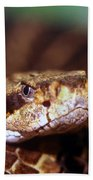 Timber Rattler Coil Hand Towel