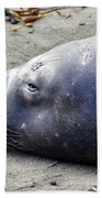 Tired Seal Bath Towel