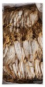 Traditional Sun Dried Squid In Kep Market Cambodia Bath Towel