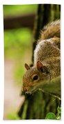Tree Squirrel Bath Towel