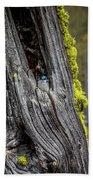 Tree Swallow Bath Towel