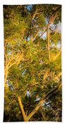 Tree With V Shaped Branches Bath Towel
