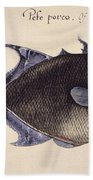 Trigger-fish, 1585 Bath Towel