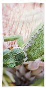 Trioceros Jacksonii - Jackson's Chameleon - Maui Hawaii Bath Towel