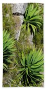 Agave Plants On Rocky Slope Bath Towel