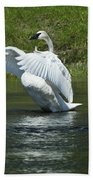 Trumpeter Swan On The Madison River Bath Towel