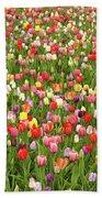 Tulip Field Bath Sheet