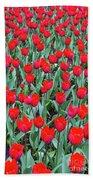 Tulips In Kristiansund, Norway Bath Sheet