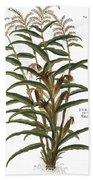 Turkish Corn, 1735 Bath Towel