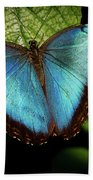 Turquoise Beauty Bath Towel