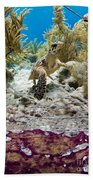 Turtle Red Carpet Hand Towel