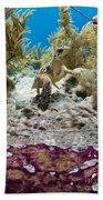 Turtle Red Carpet Bath Towel