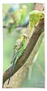 Two Adorable Budgie Parakeets Living In Nature Bath Towel