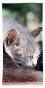 Two Cats  Sleeping  Bath Towel