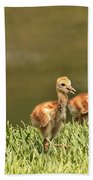 Two Chicks Bath Towel