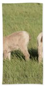 Two Ewes In The Badlands Bath Towel