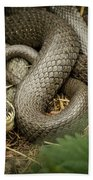 Two Intertwined Grass Snakes Lying In The Sun Bath Towel