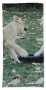 Two Lion Cubs Playing Bath Towel