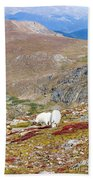 Two Mountain Goats On Mount Bierstadt In The Arapahoe National Fores Bath Towel