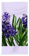 Two Purple Hyacinths Bath Towel