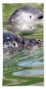 Two Seal Swimming Nature Scene Bath Towel