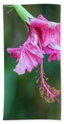 Unfolding Of A Hibiscus Hand Towel