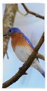 Very Bright Young Eastern Bluebird Perched On A Branch Colorful Bath Towel