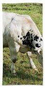 Very Muscled Cow In Green Field Bath Towel